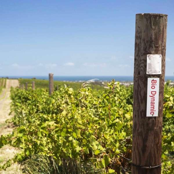 biodynamic sign Paxton wine